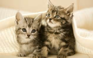 子猫:子猫4匹生き埋めに…千葉の ...