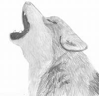 Wolf Pencil Sketch Drawing