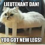 Cat Meme Lieutenant