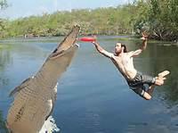 Ultimate Frisbee Alligator