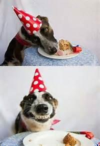 Love Happy Birthday Dogs