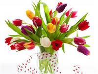 Tulips Flowers Vase