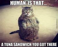 Fat Cat Memes Funny