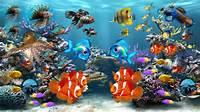 Fish Aquarium Screensaver Windows 8