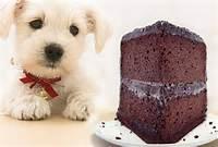 Dog Eating Chocolate Cake