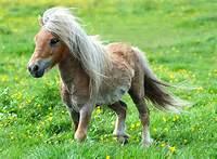 Cute Baby Ponies