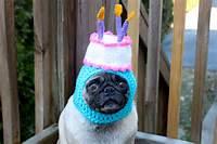 Pug With Birthday Hat