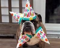 Funny Animal Happy Birthday Dog