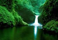 Amazon Rainforest South America