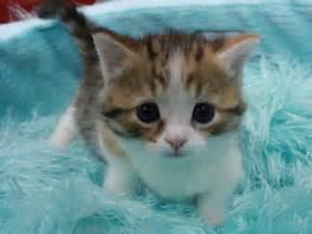 子猫:子猫】キュン死する子猫画像 ...