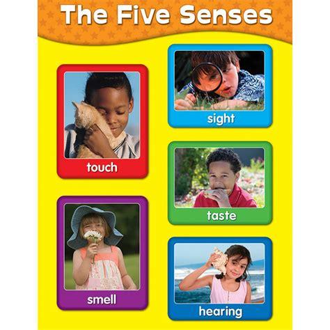 114057 Five Senses Chart