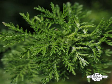 Hao Qing Inn China