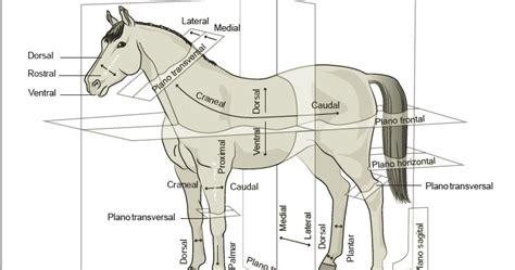 Anatomia Veterinaria Aplicada