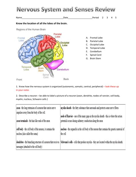 Answer Key To The Nervous System Review