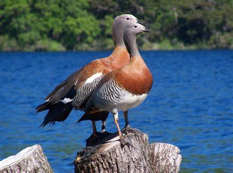 Aves Acuaticas Naturaleza Aves