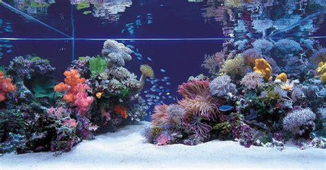 Beginner Guide Marine Aquarium