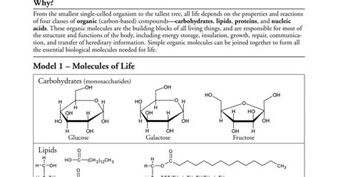 Biological Molecules Pogil Answers