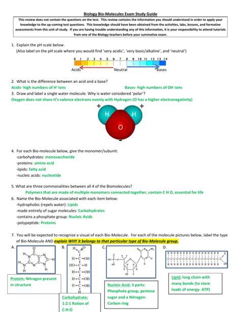 Biomolecule Study Guide