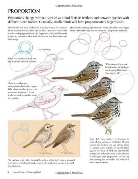 Bird Guide Drawings