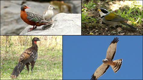 Cantos De Las Aves: Noroeste
