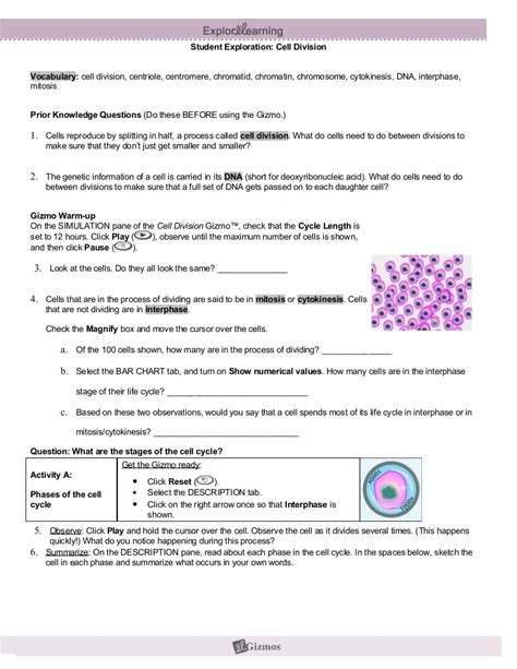 Cell Division Mitosis Answer Keys