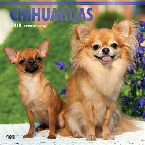 Chihuahua Puppies 2018 Wall Calendar