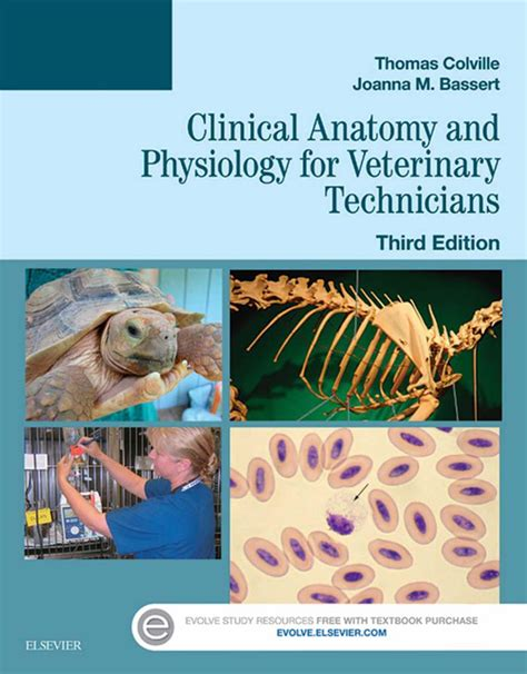 Clinical Anatomy And Physiology For Veterinary Technicians English Edition