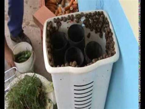 Como Hacer Cria De Caracoles How To Raise Snails Emprendimientos