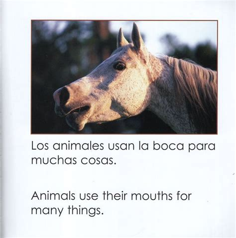 Como Usan Los Animales Sus Boca How Do Animals Use Their Mouths Como Usan Los Animales How Do Animals Use