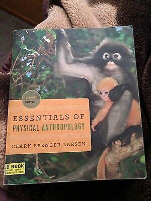 Essentials Of Physical Anthropology Larsen 2nd Edition