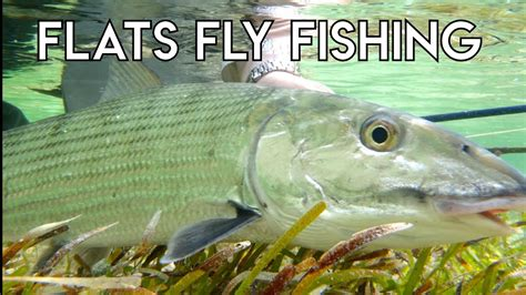 Fly Fishing Bonefish Permit And Tarpon