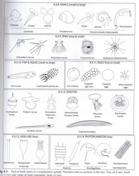 Freshwater Phytoplankton Identification Manual