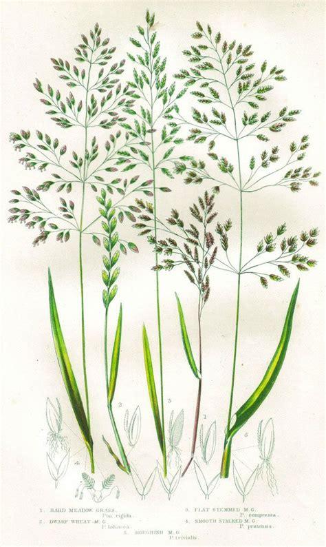 Grasses (Botanical (Reaktion))