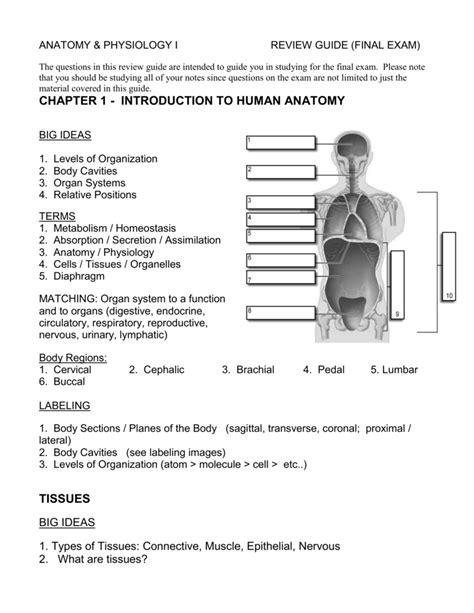 Humqn Anatomy Physiology Exam Study Guide