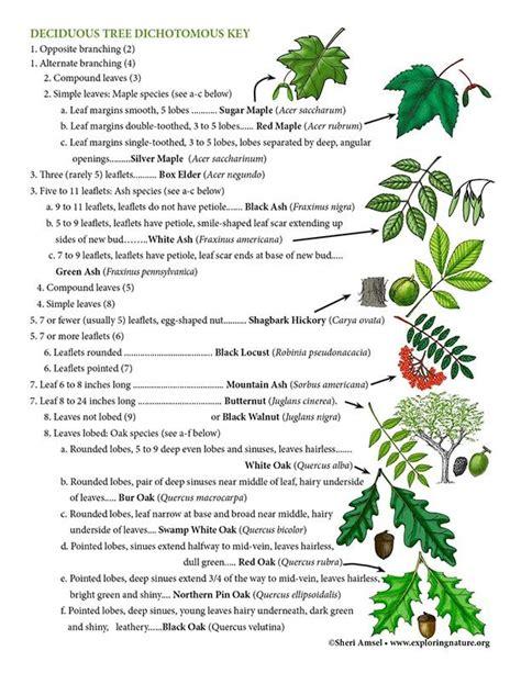 Illinois Dichotomous Tree Guide