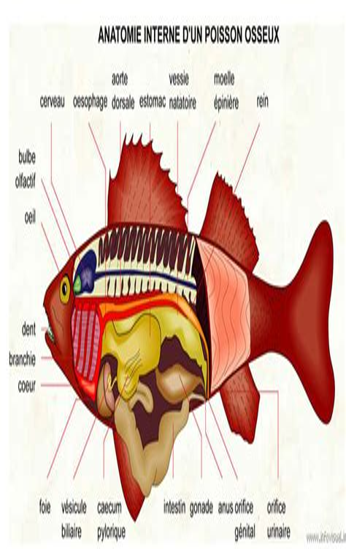 L'anatomie Du Gag