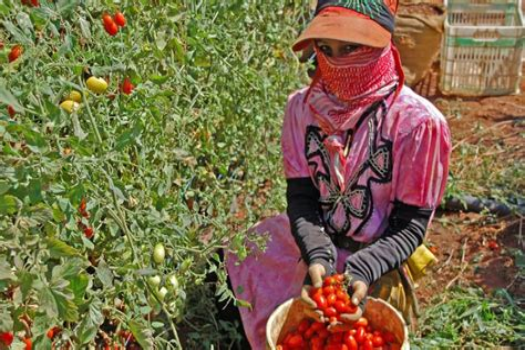 Le Role Economique des Femmes dans le Developpement Agricole et Rural: Promotion des Activites Generatrices de Revenus