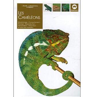 Les Cameleons De Montagne De Plaine Et Les Cameleons Nains