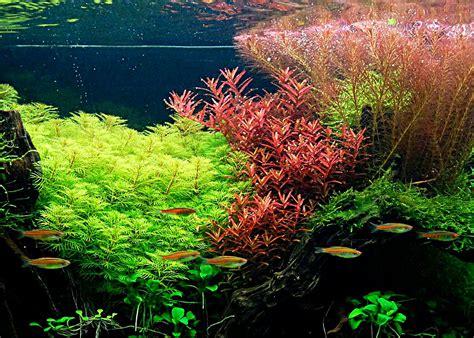 Les Plantes Daquarium