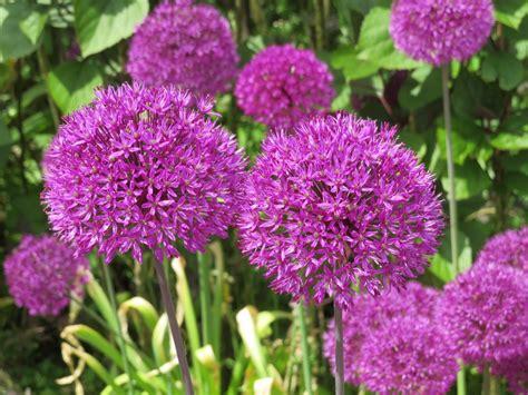 Les Plus Belles Plantes Du Jardin Fleurs Plantes Vivaces Et Arbustes Dornement