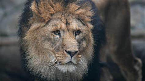 Les animaux.