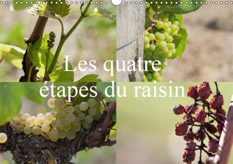 Les quatre etapes du raisin 2019: Le raisin, le nectar des Dieux