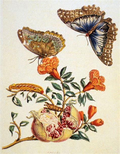 Maria Sibylla Merian Insects Of Surinam