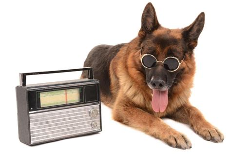 Music For Dogs Work For Radio