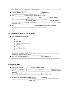 Nervous System Study Guide Games