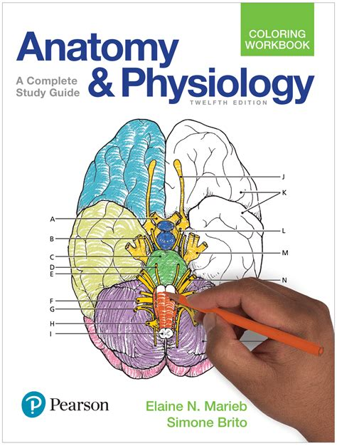Pearson Anatomy Physiology Study Guide Answers