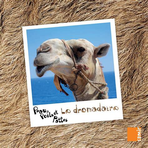 Peau Poils Et Pattes Le Dromadaire