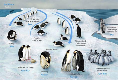 Penguin Biology