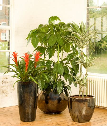 Placed In Indoor Plant Pots To Add Natural Beauty Of Any Space