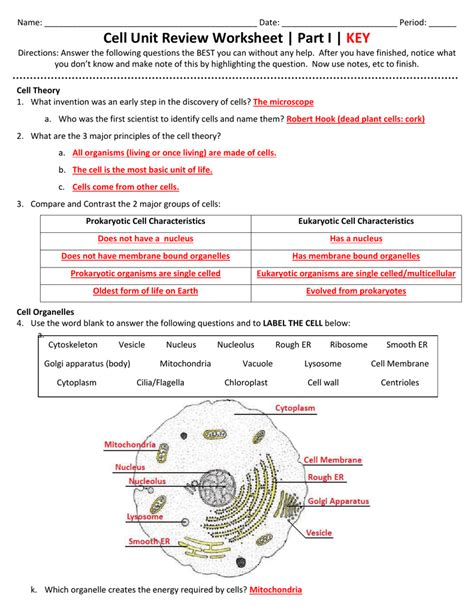 Plant Cell Information Guide Answer Key